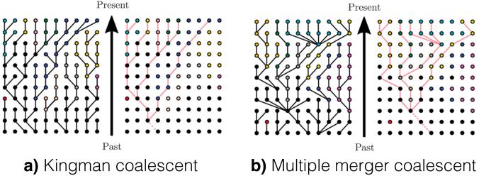 multiple_merger_coalescent